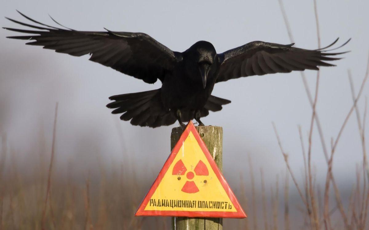Что такое радиация.